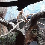 Photo of Batu Secret Zoo (Jawa Timur Park 2)