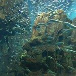 海遊館の写真