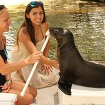 Meeting the baby sealion
