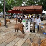 Stall selling deer biscuits