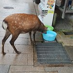 Drinking water for the deers