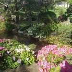 Bilde fra El Jardín Japones de Montevideo