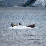 seals or sea lions?