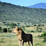 Kenya Safaris Holiday照片