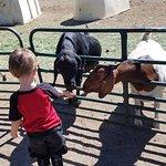 Foto de Carver's Cove Petting Farm