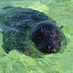 Heerlijk zwemmend en genietend van de aandacht