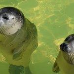 Jonge zieke zeehondjes in de opvang