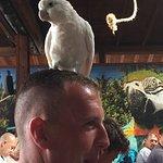 Live Parrot Show