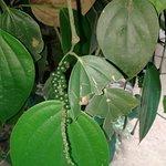 Photo of New Ranweli Spice Garden