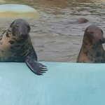 Mablethorpe Seal Sanctuary and Wildlife Centre fényképe
