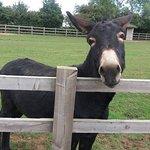 Radcliffe Donkey Sanctuary fényképe