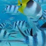 Photo of Aqua Safari Helmet Dive