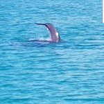 Photo of Dolphin Watch
