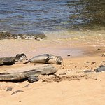 Monk seal who was having fun just watching us