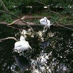 Foto van Antwerp Zoo (Dierentuin)