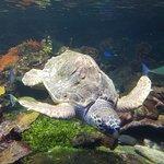 Aquarium of Genoa Foto