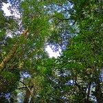 Bilde fra Tsitsikamma Forest's Big Tree
