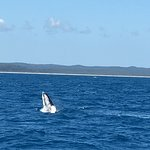 Foto van Quick Cat II - Hervey Bay Whale Watch