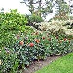 Borde Hill Gardenの写真