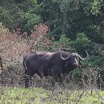 iSimangaliso Wetland Park Foto