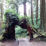 Photo of Alishan National Forest Recreation Area