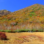 Tsugaike Natural Park의 사진