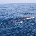 Фотография Seadolphins Algarve