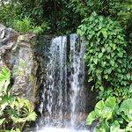 Lush flora frames a waterfall.