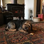 Dog biscuit, warm fire, water ... ideal afternoon for a BT