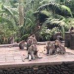 Monkeys busy eating