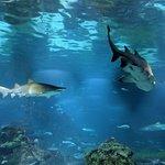 L'Aquarium de Barcelonaの写真