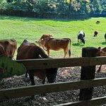 Bilde fra Flying Cow Ranch
