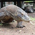 Komodo Trekker照片