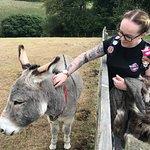 The Donkey Sanctuary Photo