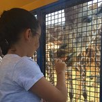 Feeding the Giraffes - amazing experience.