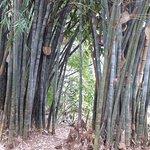 Bild från Nairobi Arboretum