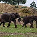 Foto de West Midland Safari and Leisure Park