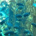 Bild från Monterey Bay Aquarium