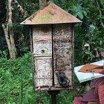 bee hive that looks like a condominium.