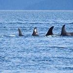 Photo de Mackay Whale Watching