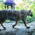 Photo of Bali Safari & Marine Park