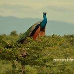 Safari at udawalawe national park
