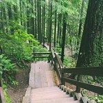 Foto de Lynn Canyon Park
