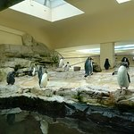 Photo of Tiergarten Schoenbrunn - Zoo Vienna