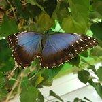 En el jardin de mariposas
