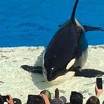 Photo of SeaWorld San Diego