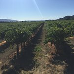 Another gorgeous day during harvest in Sonoma County's Alexander Valley!