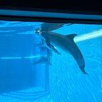 Foto van Siegfried & Roy's Secret Garden and Dolphin Habitat