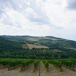 Bilde fra Monte Bernardi