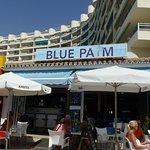Foto de Blue Palm